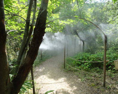 Heat wave: misting is required!